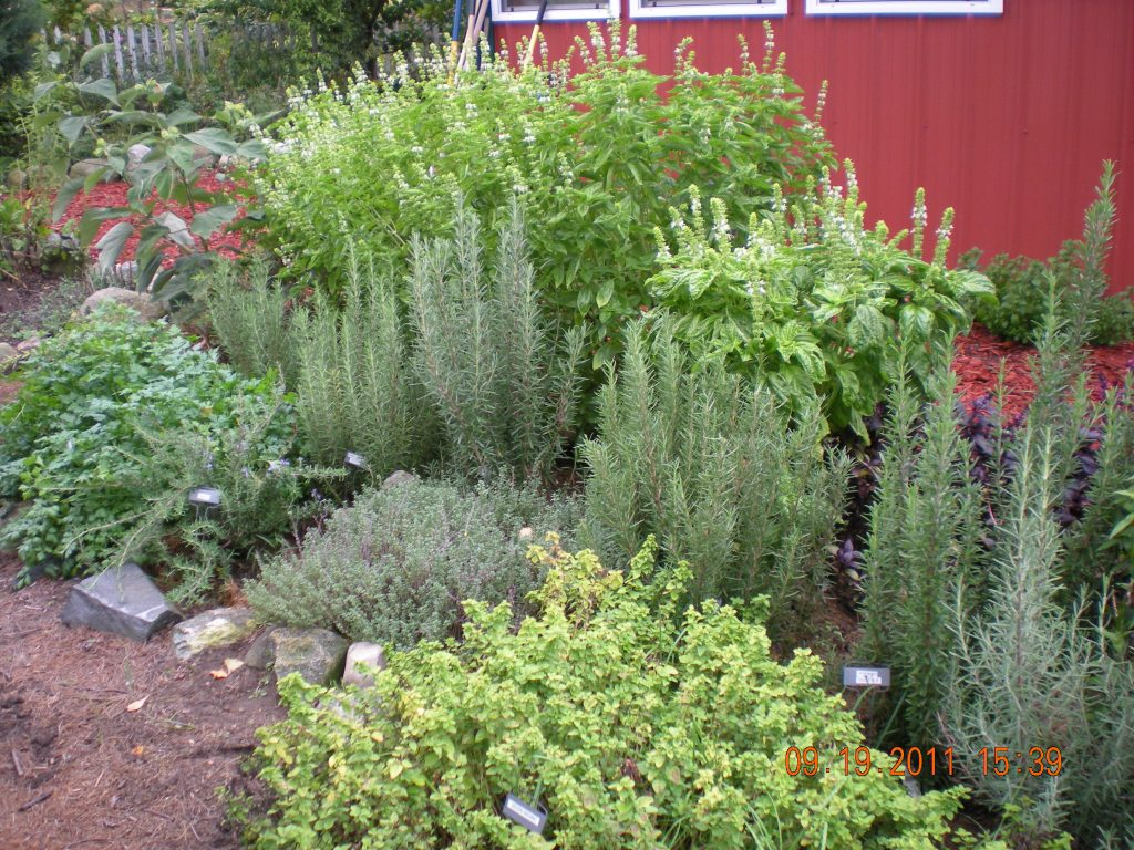 keep a herb garden to perk up your landscape